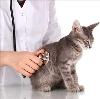 Ветеринарные клиники в Русском Камешкире